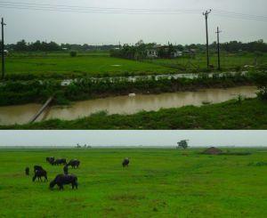 ヤンゴン近郊の風景